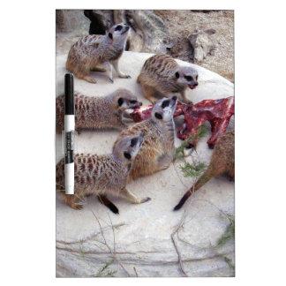 Carnivorous_Meerkats,_ Dry-Erase Board