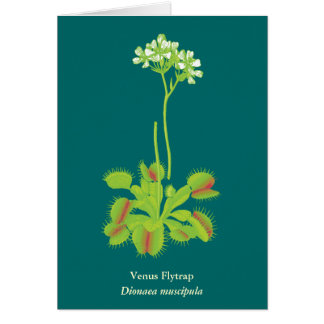 Carnivorous Plant Floral Art Greeting Cards