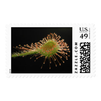 Carnivorous Plant Postage Stamps