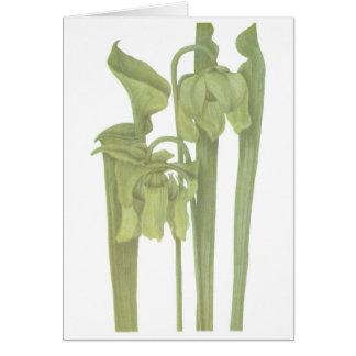 Carnivorous Plant - Sarracenia flava Greeting Card