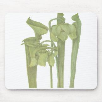Carnivorous Plant - Sarracenia flava Mouse Pads