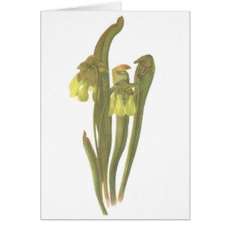 Carnivorous Plant - Sarracenia minor Card