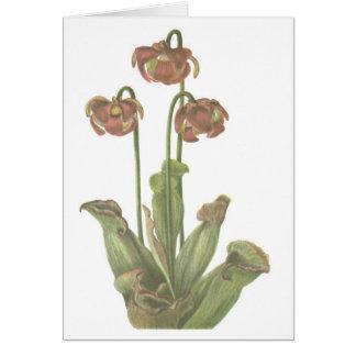 Carnivorous Plant - Sarracenia purpurea Card