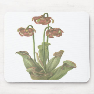 Carnivorous Plant - Sarracenia purpurea Mouse Pads