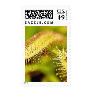 Carnivorous Plants Stamp