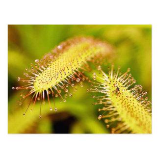 Carnivorous Plants Post Card