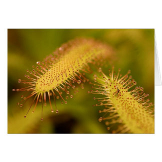 carnivorous plants postcard