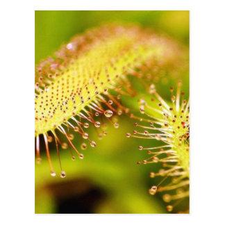 Carnivorous Plants Post Cards