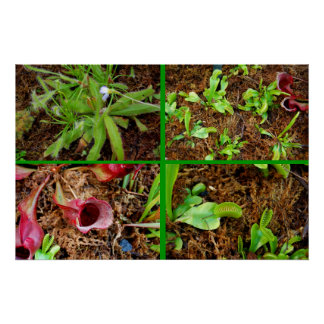 Carnivorous Plants Posters