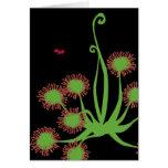Carnivorous Sundew Plant Cards