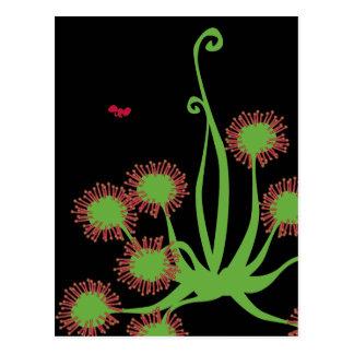 Carnivorous Sundew Plant Post Cards