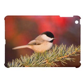 Carolina Chickadee in Blue Atlas Cedar iPad Mini Case