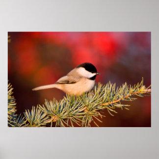 Carolina Chickadee in Blue Atlas Cedar Print