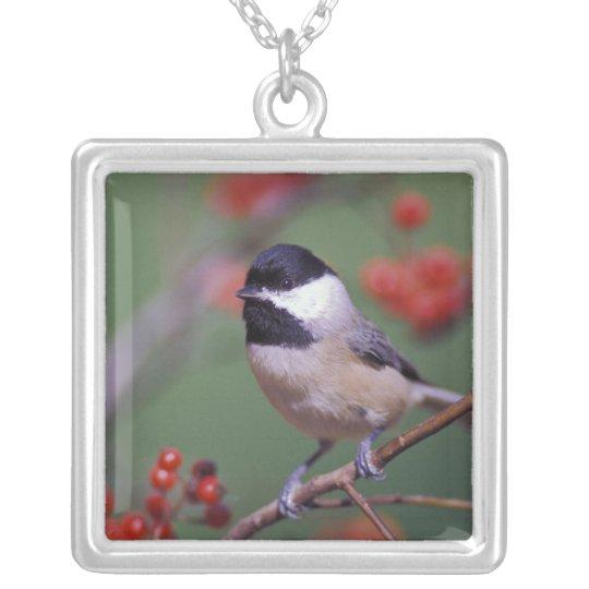 Carolina Chickadee Silver Plated Necklace