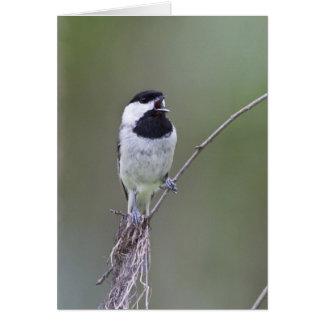 Carolina chickadee singing card
