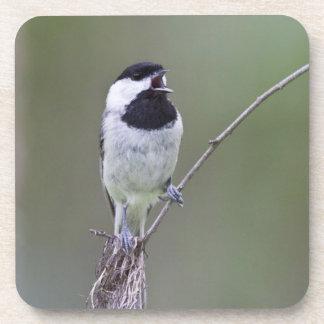 Carolina chickadee singing coaster