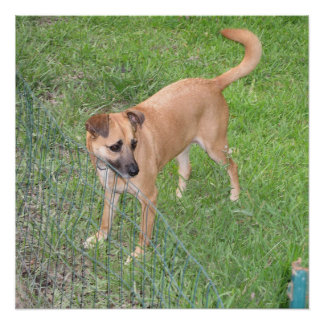 carolina dog full 2 poster
