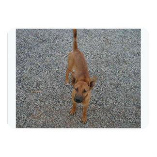 Carolina dog full.png 5x7 paper invitation card