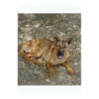 Carolina dog laying.png card