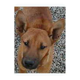 Carolina dog.png card