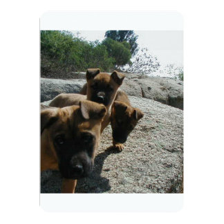Carolina dog puppies.png card