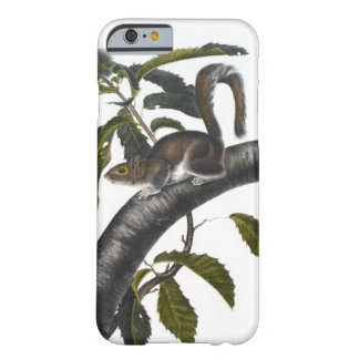 Carolina Gray Squirrel Barely There iPhone 6 Case
