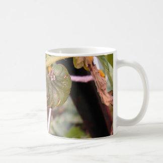 Carolina Hornworm mug