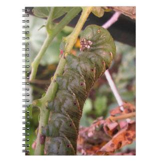 Carolina Hornworm ~ notebook