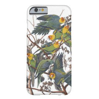 Carolina Parakeet Barely There iPhone 6 Case