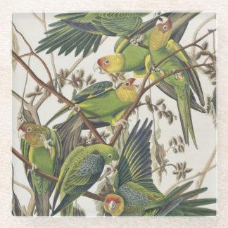 Carolina Parakeet, from 'Birds of America', 1829 Glass Coaster