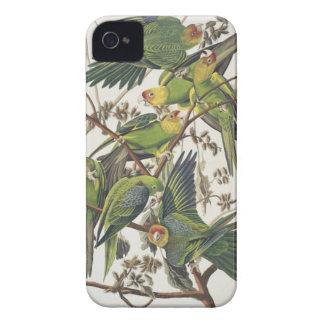 Carolina Parakeet, from 'Birds of America', 1829 iPhone 4 Case