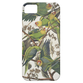 Carolina Parakeet, from 'Birds of America', 1829 iPhone SE/5/5s Case