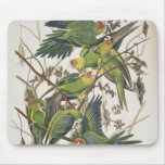Carolina Parakeet, from 'Birds of America', 1829 Mouse Pad