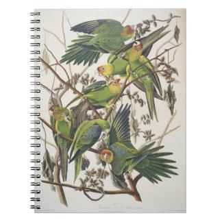 Carolina Parakeet, from 'Birds of America', 1829 Notebook