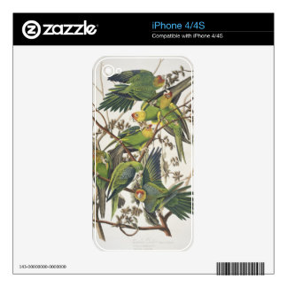 Carolina Parakeet, from 'Birds of America', 1829 Skins For iPhone 4