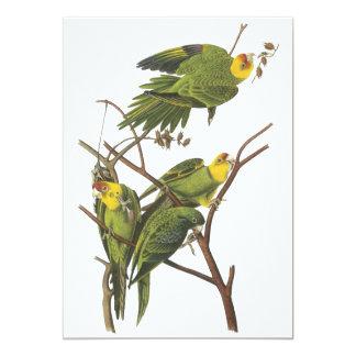 "Carolina Parakeet, John Audubon 5"" X 7"" Invitation Card"