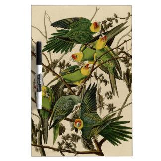 Carolina Parrot Dry Erase Board
