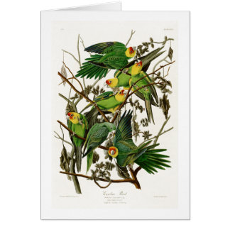 Carolina Parrot John Audubon Birds of Ameria Greeting Card