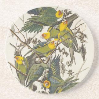Carolina Parrot - John James Audubon 1827-1838 Posavasos Diseño