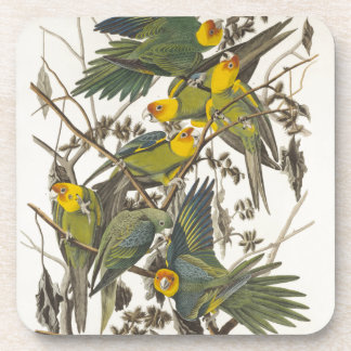 Carolina Parrot - John James Audubon 1827-1838 Posavaso