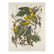 Carolina Parrot - John James Audubon (1827-1838) Postcard