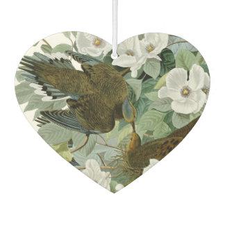 Carolina Pigeon John James Audubon Birds