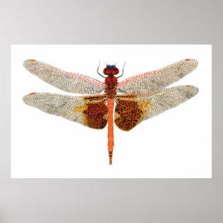 Carolina Saddlebags Dragonfly Poster