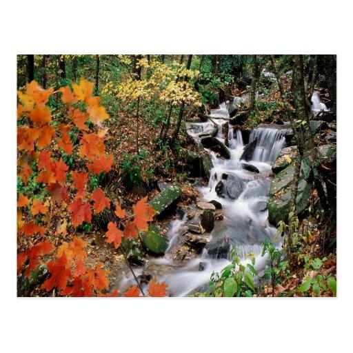 Carolina Stream 2 Postcards