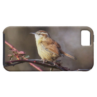Carolina Wren iPhone SE/5/5s Case
