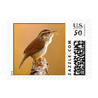 Carolina Wren Singing in the Morning Postage