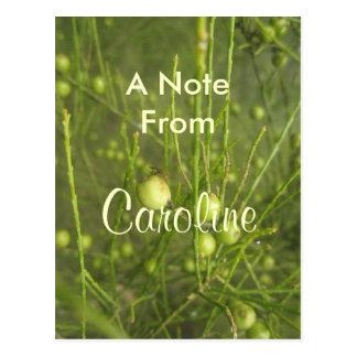 Caroline Postcard