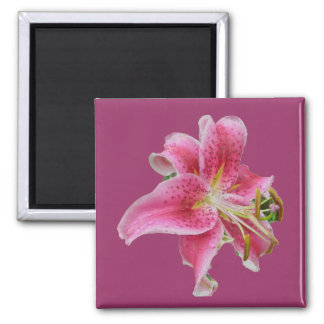 Carolyn's Lily Magnet