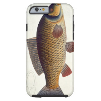 Carp (Cyprinus Carpio) plate XVI from 'Ichthyologi Tough iPhone 6 Case