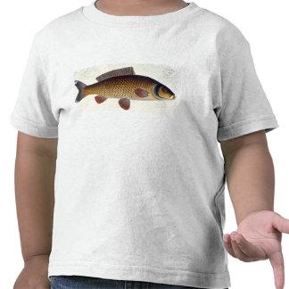Carp (Cyprinus Carpio) plate XVI from 'Ichthyologi T-shirt